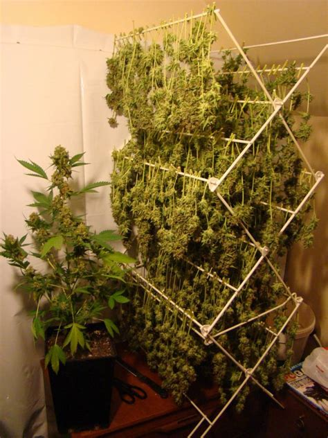 Power Plant Harvest - Welcome to THCtalk