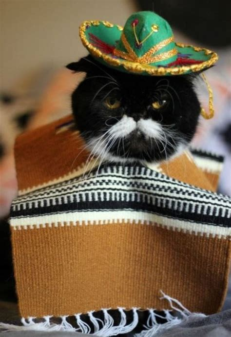 20 Pets Celebrating Cinco De Mayo Whether They Like It Or Not!